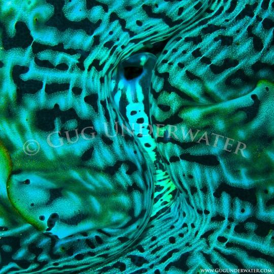 OCEAN ESSENCE 10